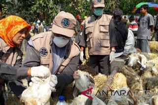 Antisipasi penyakit, Pemkab Temanggung periksa hewan kurban