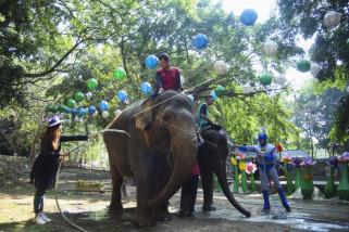 Peringatan hari gajah sedunia