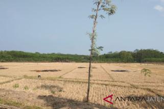 Kekeringan landa tiga kecamatan di Pekalongan