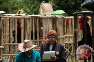 Kontes ayam pelung se-Indonesia untuk jaga kemurnian
