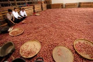 Inovasi dan diversifikasi jaga berkah bawang merah