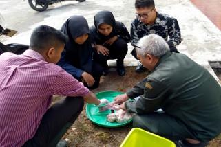 Mahasiswa STPP diajak kenali anatomi dan fisiologi reproduksi sapi