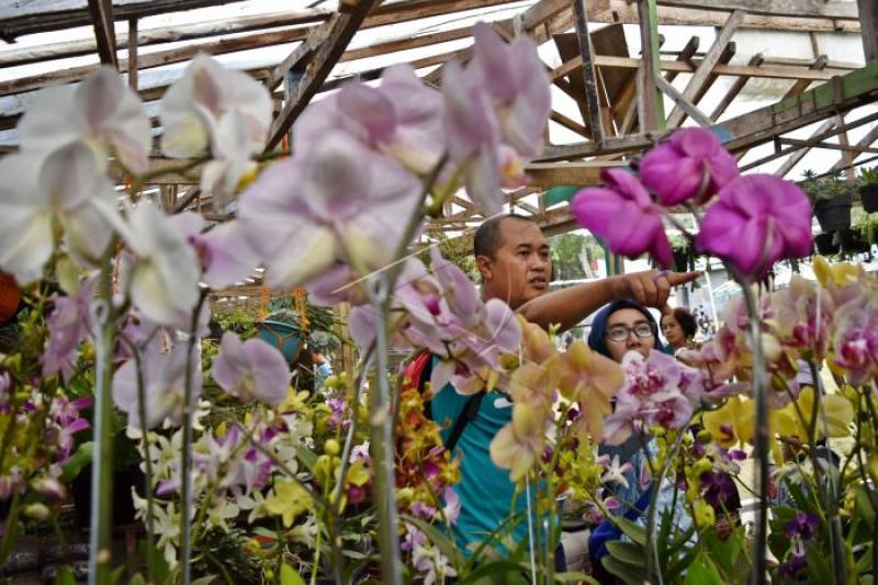 Peningkatan sektor florikultura
