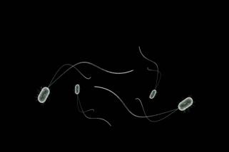 Ini fungsi bakteri baik dan bakteri jahat menurut Dr Harry