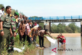 Ratusan ribu bibit ikan ditebar di bendungan Sungai Kramat Batang