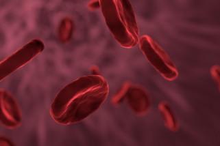 Orang lain juga bisa jadi donor pasien kanker darah