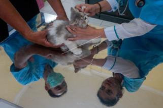 Pemberian vaksin rabies gratis