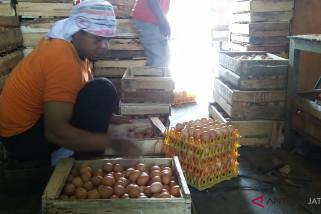 Penurunan harga telur tak untungkan pedagang