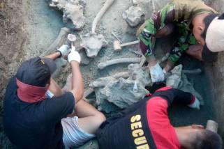 Fosil gajah purba dititipkan di Museum Patiayam Kudus