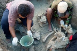 Fosil gajah dari Pati dititipkan di Patiayam