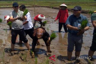 Musim tanam mundur, BI: Harga beras berpotensi naik