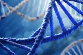 DNA bisa tersimpan lama di tulang
