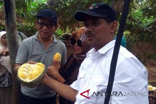 Banyumas didorong kembangkan agrowisata durian