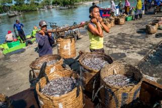 Harga ikan teri naik