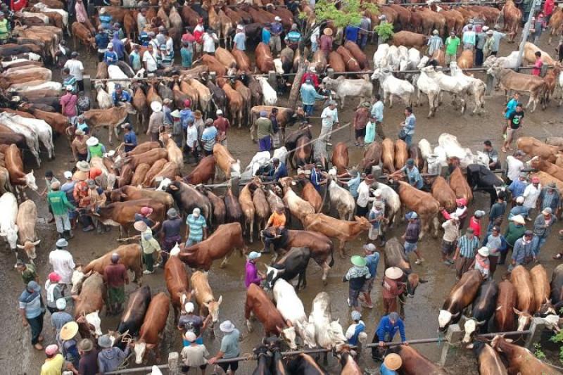 Pasar hewan Kliwonan