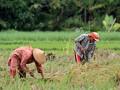 Bantul berupaya tingkatkan produktivitas padi lahan kering
