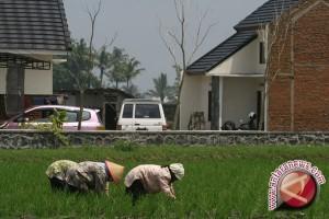 Bupati Bantul larang alih fungsi lahan pertanian