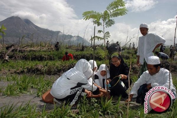 Ribuan tanaman penghijauan Merapi diserang