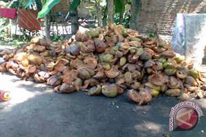 Kulon Progo dirikan rumah produksi serabut kelapa