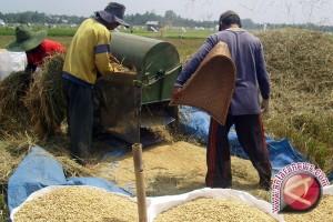 Pemkab diminta rumuskan insentif petani pertahankan lahan