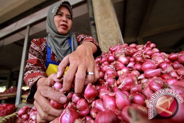 Luasan bawang merah Kulon Progo 534 hektare