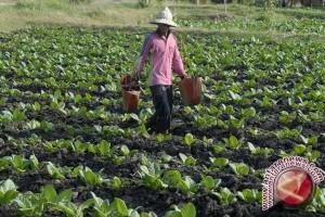 BKPP DIY optimalkan penyuluh tingkatkan kapasitas petani