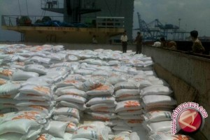 impor beras diharapkan tidak ganggu panen raya