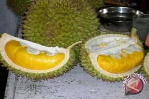 Produksi buah di Gunung Kidul turun