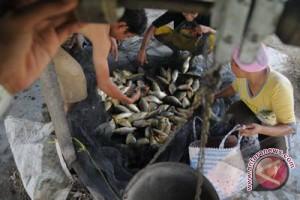 Pemkab Kulon Progo beri hibah kelompok pembudi daya ikan