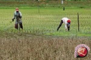 BASF berkomitmen ciptakan solusi inovatif bagi petani