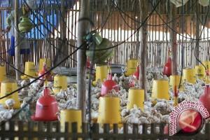 Bantul alihkan bantuan kegiatan peternakan untuk infrastruktur