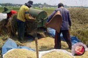 Cabup: petani bentuk kelompok untuk akses bantuan