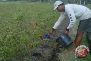Petani didorong terapkan pemupukan berimbang
