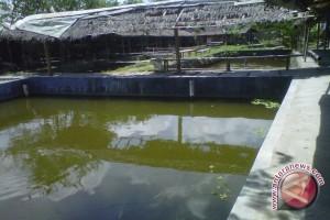 Kelompok pembudidaya ikan digratiskan pinjam eksavator untuk membuat kolam