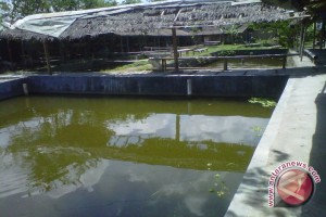 DKP dampingi Poklasar Binangun pasarkan ikan