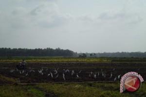 Bantul butuh 1.500 hektare sawah tiap bulan