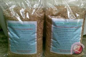 Petani Argorejo Bantul produksi benih varietas unggul