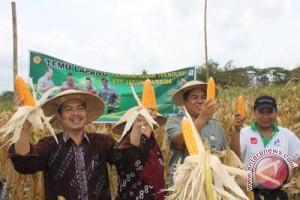 Disperindagkop: tingginya harga telur dipengaruhi produksi jagung