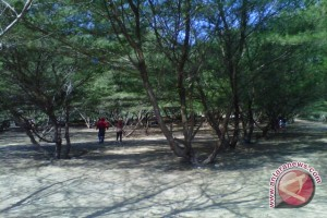 Bantul programkan penanaman pohon sempadan pantai
