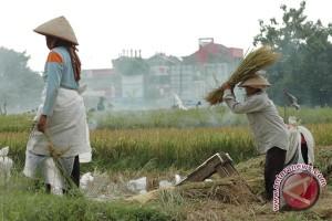 Petani Kalibawang harapkan pembuatan saluran air