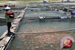 Pemkab: produksi sektor perikanan Bantul alami penurunan