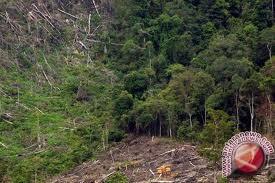 Ratusan peneliti hutan dunia berkumpul di Yogyakarta