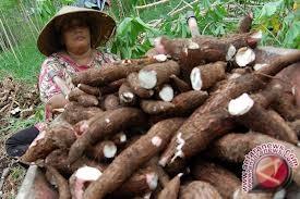 Yogyakarta-Kodim 0734 meningkatkan produksi tanaman pangan