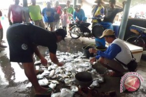 Nelayan Kulon Progo panen ikan bawal