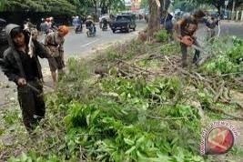 BLH Yogyakarta intensifkan pemangkasan pohon antisipasi tumbang -