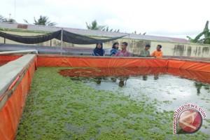 Kulon Progo kembangkan kawasan sentra produksi perikanan