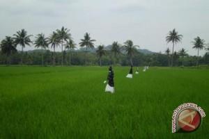 Bantul petakan bidang sawah lahan pertanian berkelanjutan