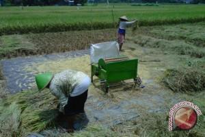 Nilai tukar petani Bantul naik lima persen