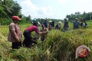 BP2KP Gunung Kidul bekali pemuda menjadi petani