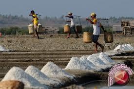 Pengembangan usaha pembuatan garam Bantul terkendala pemasaran